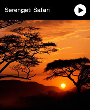 Cheap Serengeti Safari Holidays